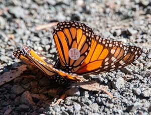 butterfly-tagged.jpg