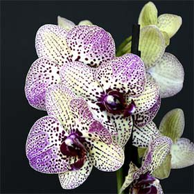 orchid-show.jpg