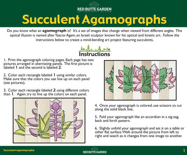 succulent-agamograph-instructions.jpg